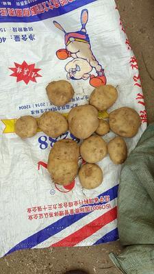 辽宁省葫芦岛市绥中县中暑5号土豆 3两以上