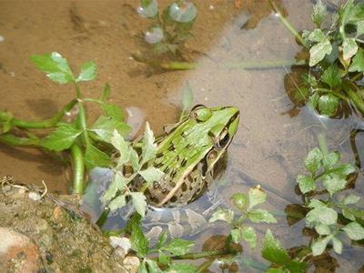 江西省上饶市上饶县青蛙