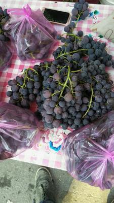 山西省运城市临猗县巨峰葡萄 10%以下 1次果 1-1.5斤
