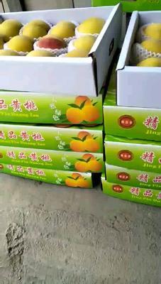 江苏省无锡市江阴市锦绣黄桃 55mm以上 4两以上