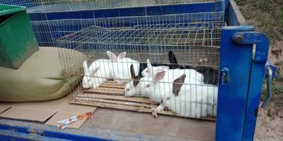 甘肃省定西市通渭县兔肉类 新鲜