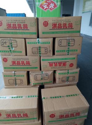 河南省郑州市惠济区乳鸽 新鲜