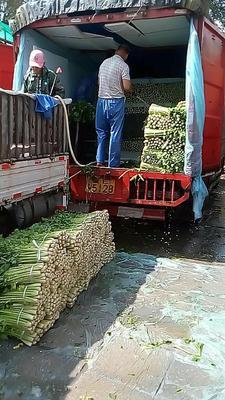 宁夏回族自治区固原市泾源县宁夏西芹 50~55cm 露天种植 0.5斤以下