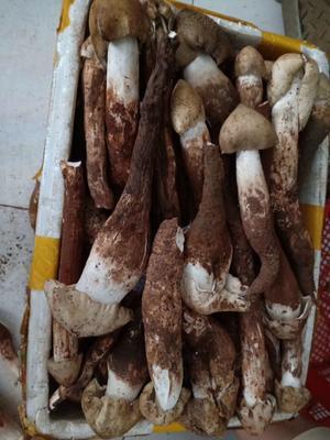 这是一张关于鸡枞菌的产品图片