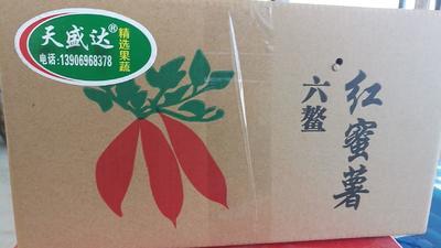 这是一张关于六鳌地瓜 红皮 3两以上的产品图片