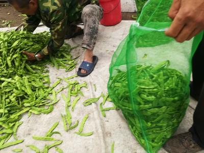 黑龙江省齐齐哈尔市讷河市绿扁豆 2cm以上 10cm以上