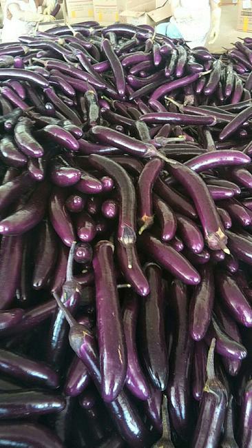 紫长茄 4两以上