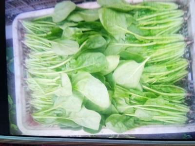 河北省张家口市沽源县大叶菠菜 25~30cm