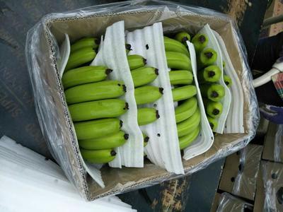 广西壮族自治区南宁市西乡塘区巴西香蕉 八成熟 50 - 60斤