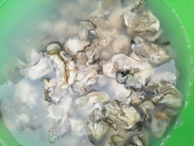 山东省威海市乳山市牡蛎肉