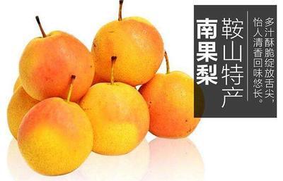这是一张关于南果梨 100-150g 55mm以上的产品图片