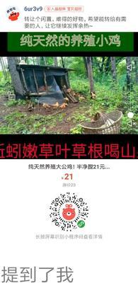 吉林省吉林市永吉县鸡肉类 新鲜