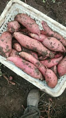 这是一张关于龙薯九号 红皮 3两以上的产品图片