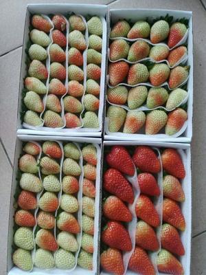 云南省昆明市西山区蒙特瑞草莓 20克以下