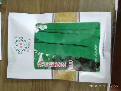 山东省潍坊市寿光市豆角种子 ≥85%