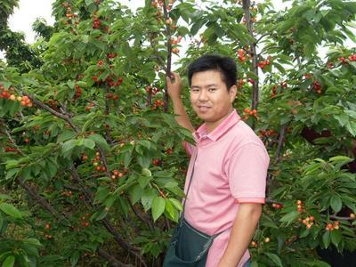 广西壮族自治区钦州市灵山县巴西樱桃苗