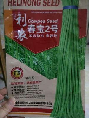 四川省成都市新都区豆角种子 ≥85%