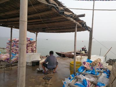 天津滨海新区南美白对虾 人工殖养 2-4钱