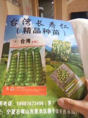 云南省昆明市官渡区豌豆苗