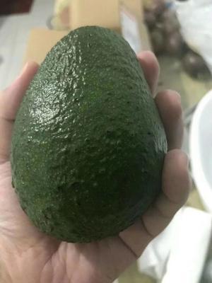 浙江省嘉兴市桐乡市墨西哥系(M)牛油果 200g以上