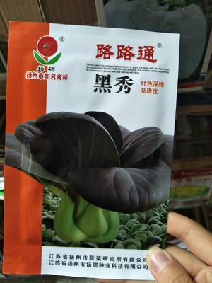 江苏省宿迁市沭阳县青梗菜种子