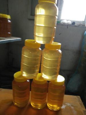 内蒙古自治区呼伦贝尔市阿荣旗意蜂蜂蜜 塑料瓶装 100% 2年