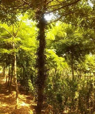 湖北省荆门市东宝区皂角树
