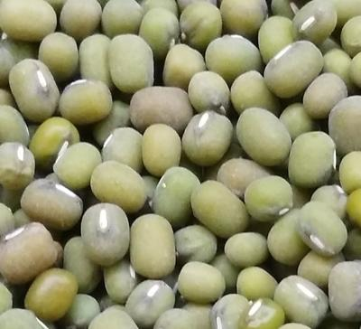 河北省廊坊市霸州市毛绿豆 散装 1等品