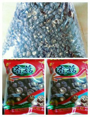 福建省泉州市永春县香菇片 袋装 1年