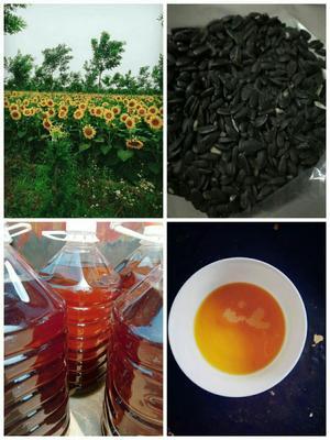 河北省沧州市泊头市有机葵花籽油