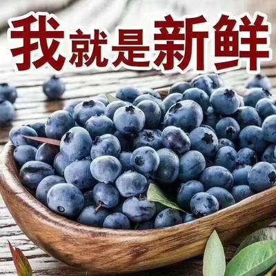 广西壮族自治区柳州市城中区野生蓝莓 鲜果 4 - 6mm以上