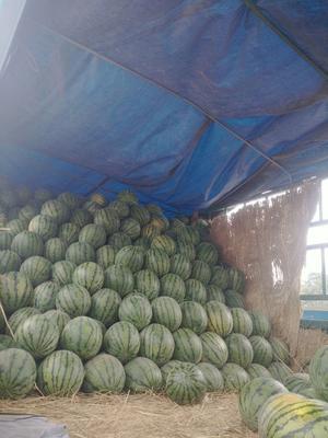 河北省石家庄市桥东区京欣西瓜 有籽 1茬 9成熟 10斤打底