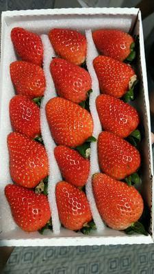 云南省昆明市西山区圣安德瑞斯草莓 20克以上