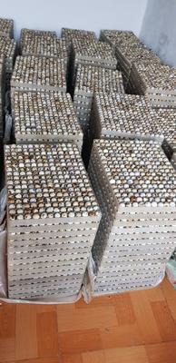 江苏省连云港市赣榆区黄羽鹌鹑蛋 食用 散装