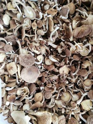 云南省昆明市官渡区香菇丁 散装 1年以上