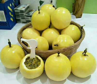 这是一张关于黄金百香果苗的产品图片