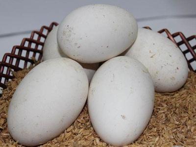 辽宁省大连市普兰店市鲜鹅蛋 食用 散装