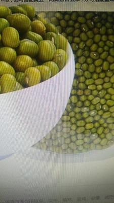 陕西省西安市雁塔区东北绿豆 散装 3等品
