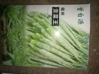 云南省大理白族自治州宾川县贡菜种子