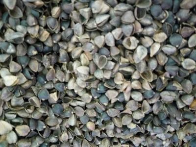 甘肃省天水市麦积区荞麦壳