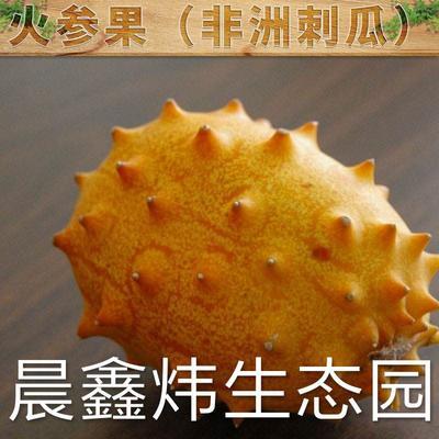 江西省赣州市兴国县火参果 0.5斤以上