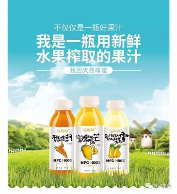 安徽省淮南市田家庵区芒果汁 塑料瓶 3-6个月