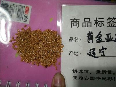 河北省保定市安国市黄金亚麻籽