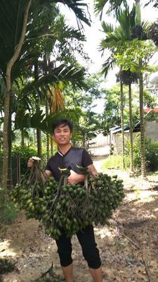 海南省三亚市海棠区槟榔