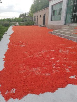 新疆维吾尔自治区伊犁哈萨克自治州尼勒克县红花