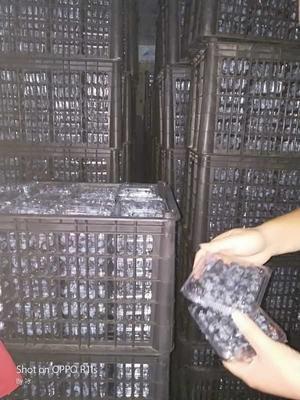 湖南省怀化市麻阳苗族自治县灿烂蓝莓 冻果 4 - 6mm以上