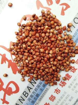 河南省郑州市中牟县高粱米 霉变 ≤1% 1等品