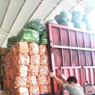 陕西省榆林市靖边县黄胡萝卜 15cm以上 2两以上 4~5cm