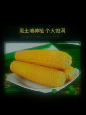 黑龙江省双鸭山市宝清县速冻糯玉米