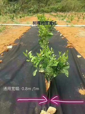 广西壮族自治区南宁市西乡塘区防草布